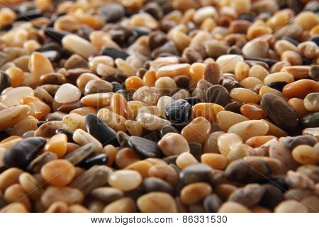close up of the river pebbles