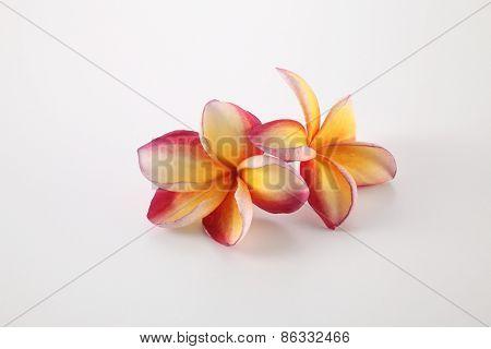 frangipani on the white background