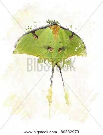 Digital Painting Of Luna Moth