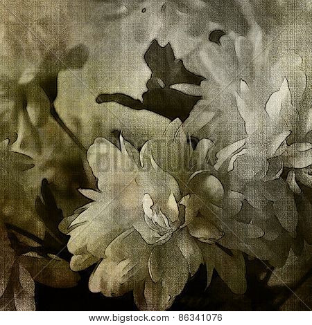 art monochrome grunge floral watercolor paper textured background with white asters  in  white, grey and black colors