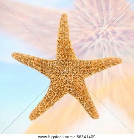 Sugar starfish double exposure