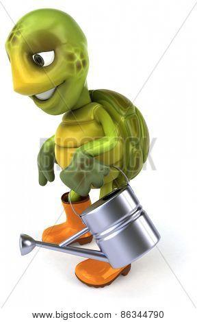 Fun turtle