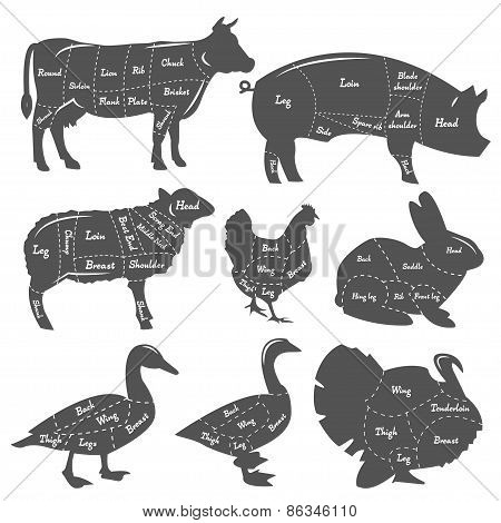 Vintage diagram of meal cutting of domestic animals