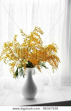 Beautiful sprigs of mimosa in vase on windowsill