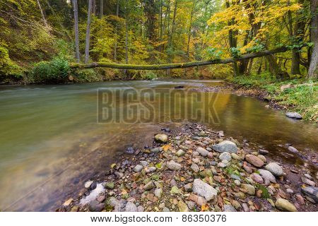 Beautiful River In Forest