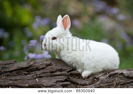 domestic baby rabbit on a log