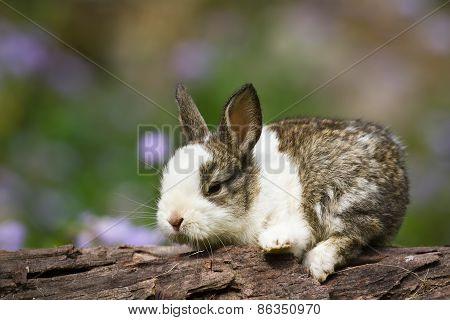cute baby rabbit walking on a log