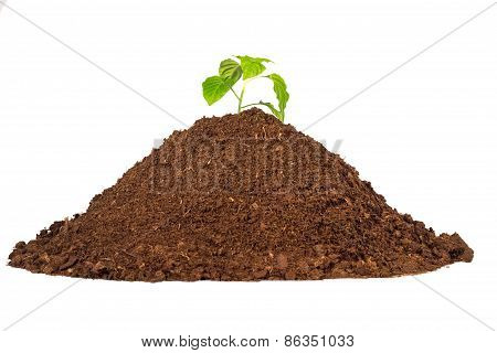 Bunch Dirty  Earthy Peat