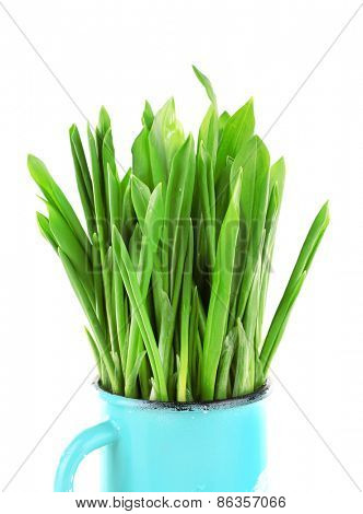 Wild leek in mug isolated on white