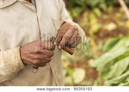 Man Cutting A Cigar With Cuba's Traditional Knife