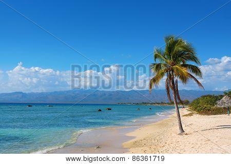 Single Coconut Palm Tree On The Beach With Sun
