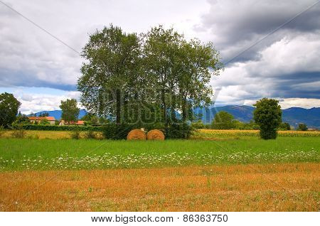 Hay bale field. Umbria. Italy.
