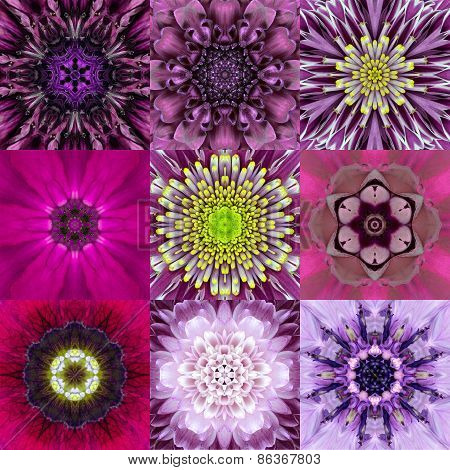 Collection Of Nine Purple Concentric Flower Mandala Kaleidoscope