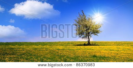 Summer Landscape And Tree.
