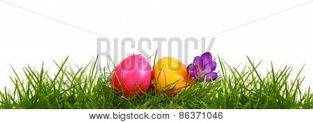 Colorful Easter Eggs And Purple Crocus.