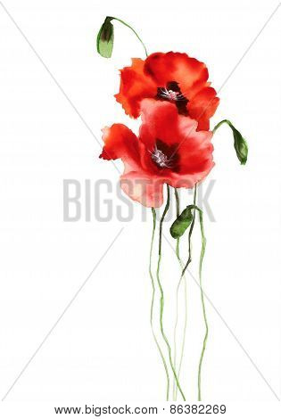 Two Watercolor Poppies On White Background Illustration