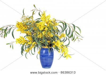 Bouquet of blossoming mimosa