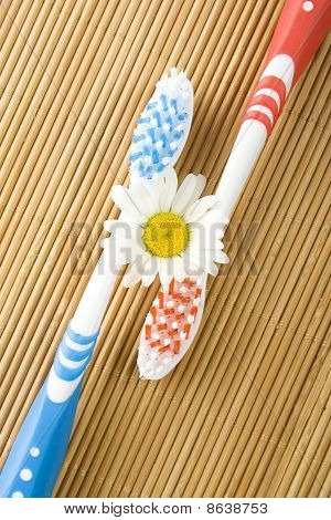 Two toothbrushes and chamomile