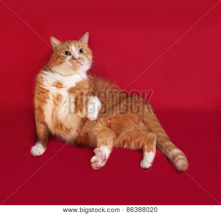 Thick Red Cat Lying On Red