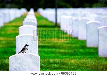 Arlington National Cemetery Virginia VA near Washington DC United States