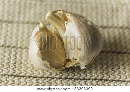Extra Large Elephant Garlic