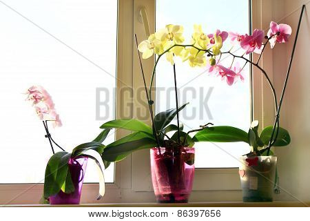 three different blossoming orchids in the flowerpots