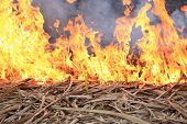image of lame  - closeup of beautiful burning fire flame outdoor - JPG