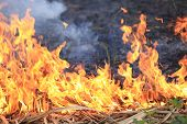 stock photo of lame  - closeup of beautiful burning fire flame outdoor - JPG