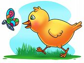 foto of chase  - Easter Chicken Chasing a Butterfly  - JPG