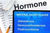 foto of hormone  - Papers with hormones list and tablet  with words mineralocorticoids  - JPG