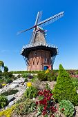 image of vegetation  - An authentic wooden windmill from the Netherlands stands among tulips and other vegetation in Holland Michigan during their springtime tulip festival - JPG