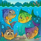 picture of piranha  - Four piranha fishes underwater  - JPG