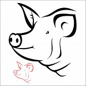picture of pig head  - Vector illustration  - JPG