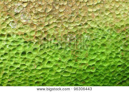 Green Lichen Pit Surface