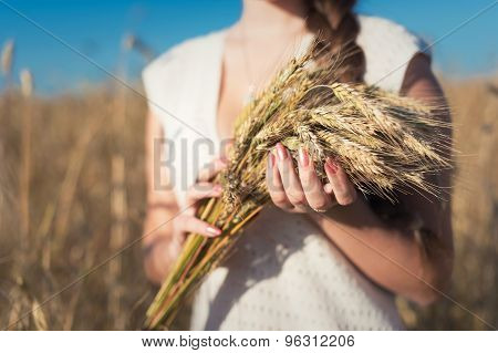 Girl's Hands With Ears Of Wheat
