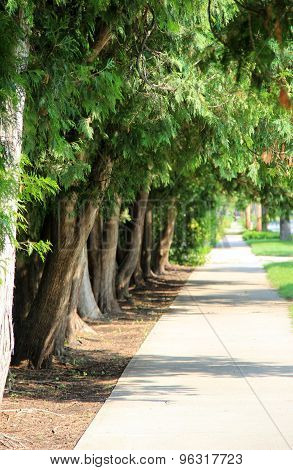 Tree lined street with branches hanging over sidewalk