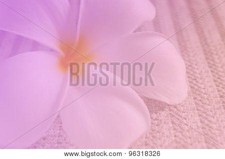 Plumeria, Sweet Flower