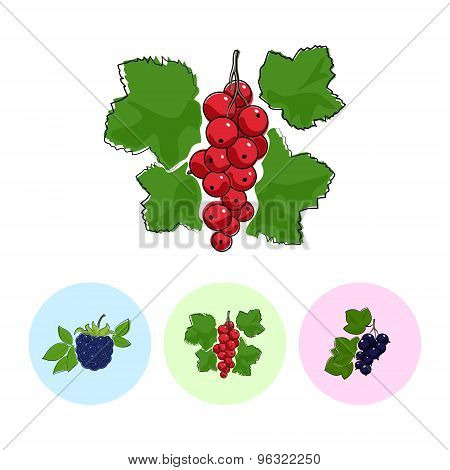 Fruit Icons, Redcurrant , Blackberry,blackcurrant