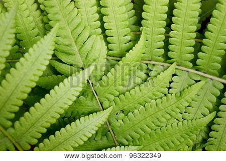 Beautyful leaf of fern is close-up background