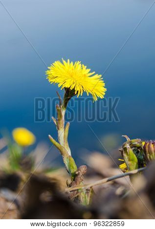 Flower On A Bank
