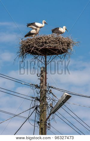 three stark in nest