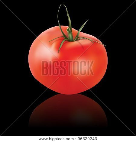 Vector Tomato Isolated On Black
