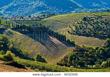 The Tuscan rural landscape