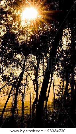 Sunset Starburst In Forest