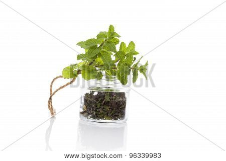 Mint, Culinary Aromatic Herbs.