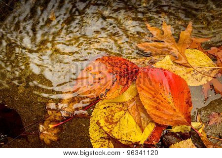 Autumn Leaves In The Puddle