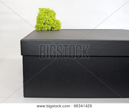 Black box with green leaves isolated on white