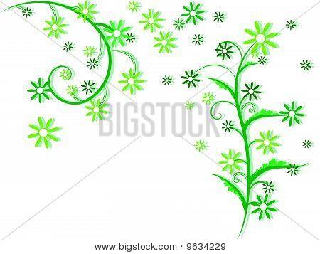 flowers foliage