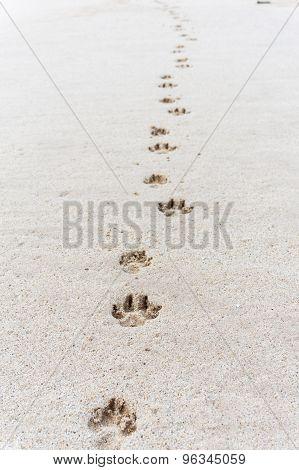 Paw Prints On Sandy Beach