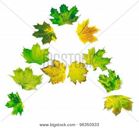 Letter A Composed Of Yellowed Maple Leafs